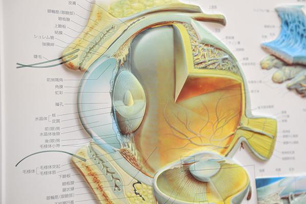 網膜剥離の予防・定期検診について